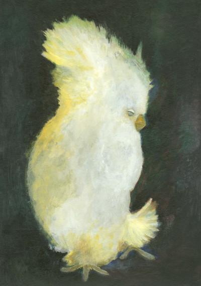 Papegøye, følelse av ro